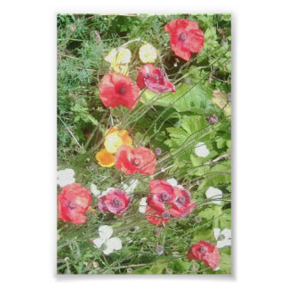 Meadow Dapple Flowers Value Poster - Very Small