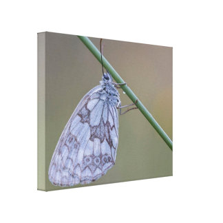 Meadow Dreams Butterfly Print Canvas Macro