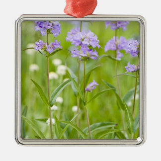 Meadow of penstemon wildflowers in the Silver-Colored square decoration