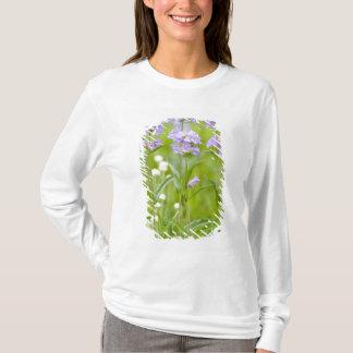 Meadow of penstemon wildflowers in the T-Shirt