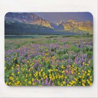 Meadow of wildflowers in the Many glacier Mouse Pad