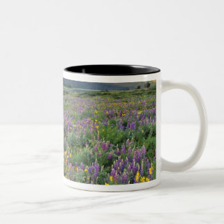 Meadow of wildflowers in the Many glacier Two-Tone Coffee Mug