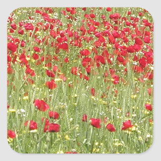 Meadow With Beautiful Bright Red Poppy Flowers Square Sticker