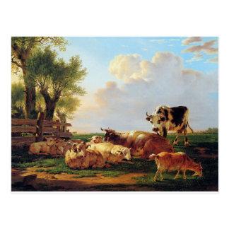 Meadow with cattle by Jacob van Strij Postcard