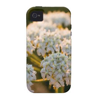 meadowflowersbywhacky (5 of 13).JPG Case-Mate iPhone 4 Cases