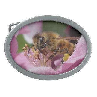 Mean Looking Honey Bee Belt Buckles