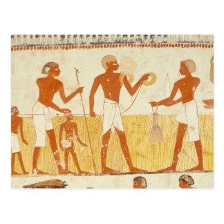 Measuring the land using rope postcard