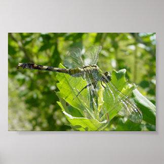 Mebourne Dragonfly Poster