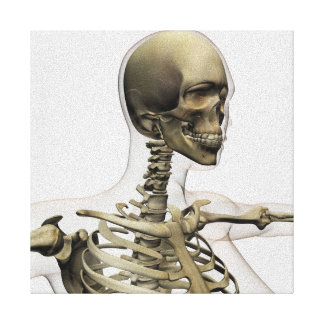 Medical Illustration Of A Woman'S Skull And Canvas Print