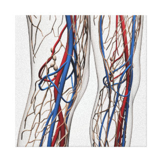 Medical Illustration Of Arteries 1 Canvas Print