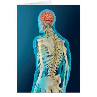 Medical Illustration Of Human Brain & Brain Stem Greeting Card