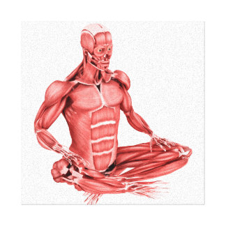 Medical Illustration Of Male Muscles Sitting Canvas Print