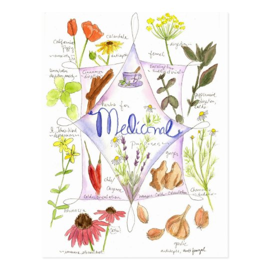 Medicinal Herb Echinacea Garlic Poppy Postcard