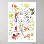Medicinal Herb Garlic Echinacea Ginger Posters