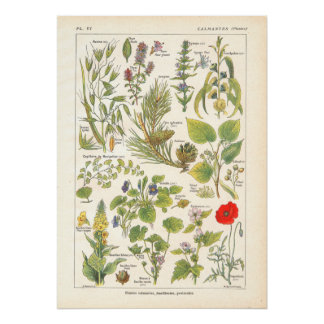 Medicinal Plants Calming Emollient Print in French