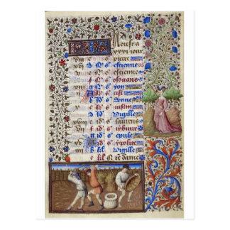 Medieval calendar: August Postcard
