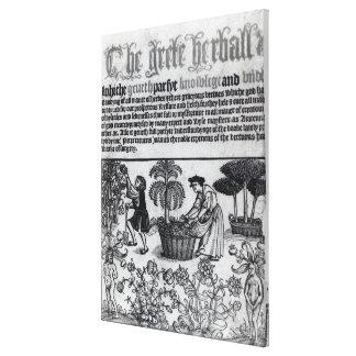 Medieval Herb Garden Canvas Print