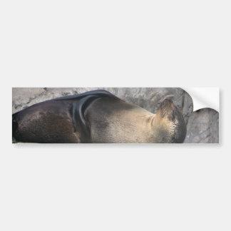 Meditating Sea Lion Car Bumper Sticker