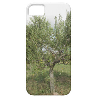 Mediterranean olive tree in Tuscany, Italy Case For The iPhone 5