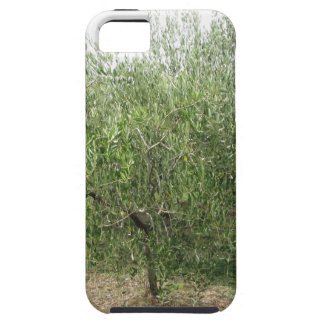 Mediterranean olive tree in Tuscany, Italy iPhone 5 Cases