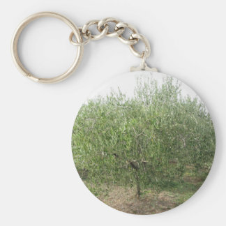 Mediterranean olive tree in Tuscany, Italy Key Ring