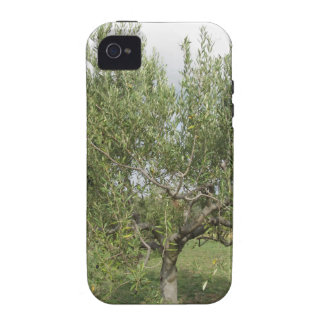 Mediterranean olive tree in Tuscany, Italy Vibe iPhone 4 Cases