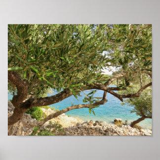 Mediterranean Sea Olive Tree Poster