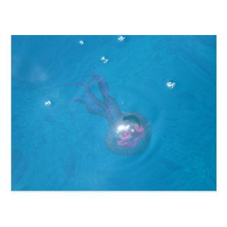 Medusa (Jellyfish) Postcard