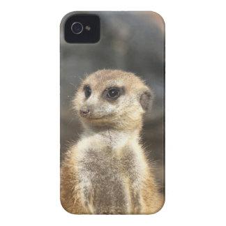 Meercat iPhone 4 Cover