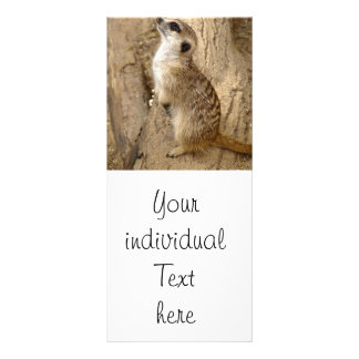 meerkat 0115 custom rack card