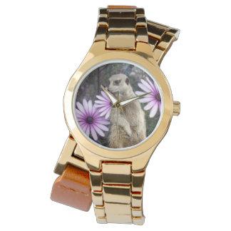 Meerkat And Daisies, Watch