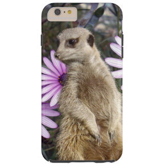Meerkat And Purple Daisies, Tough iPhone 6 Plus Case