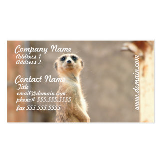 Meerkat at Attention Business Cards