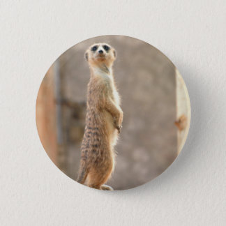Meerkat at Attention Button