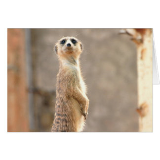 Meerkat at Attention Greeting Card