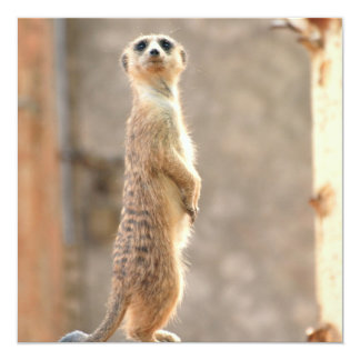 Meerkat at Attention Invitations