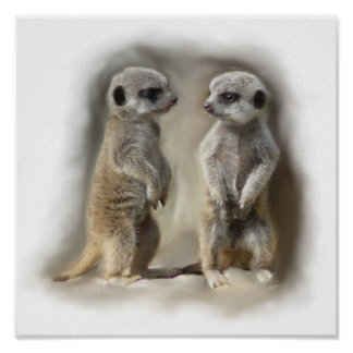 Meerkat baby twins poster