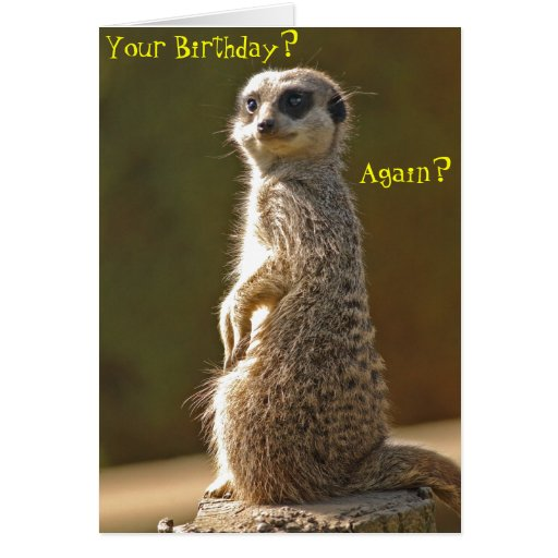 Meerkat Birthday Card