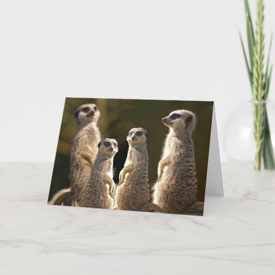 Meerkat Birthday Greeting Card Zazzle