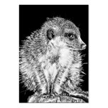 Meerkat, Black and White Pack Of Chubby Business Cards