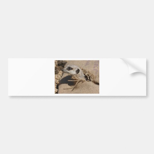 meerkat bumper stickers