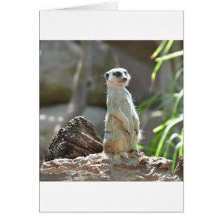 Meerkat Card