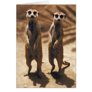 Meerkat cards