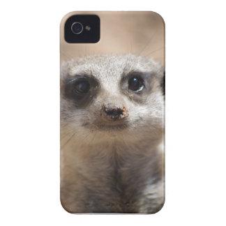 Meerkat Case-Mate iPhone 4 Cases