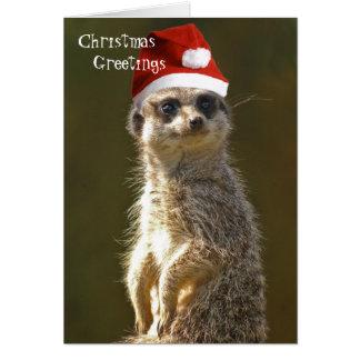 Meerkat Christmas Greetings Card