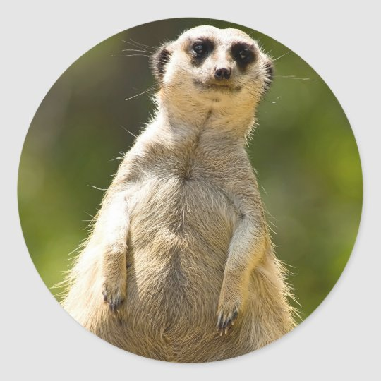 Meerkat Classic Round Sticker