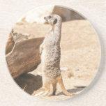 Meerkat Drink Coasters