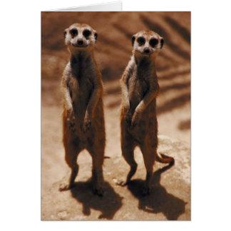 Meerkat Duo Greeting Card