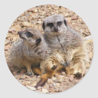 Meerkat Duo Sticker