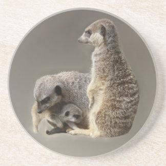 meerkat family coaster
